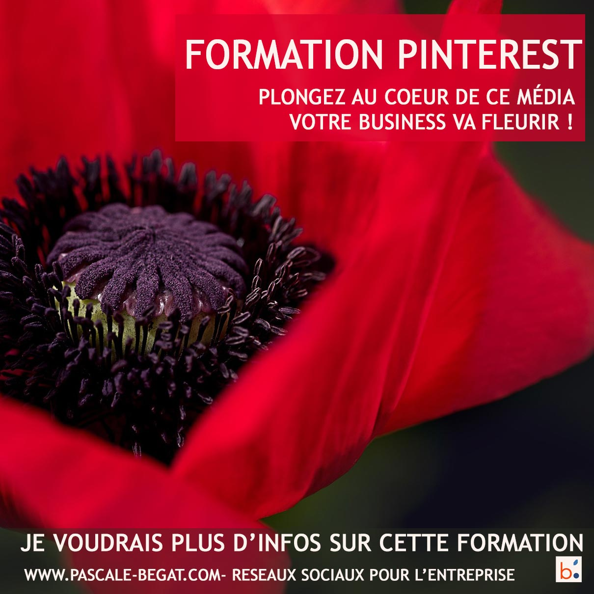Formation Pinterest