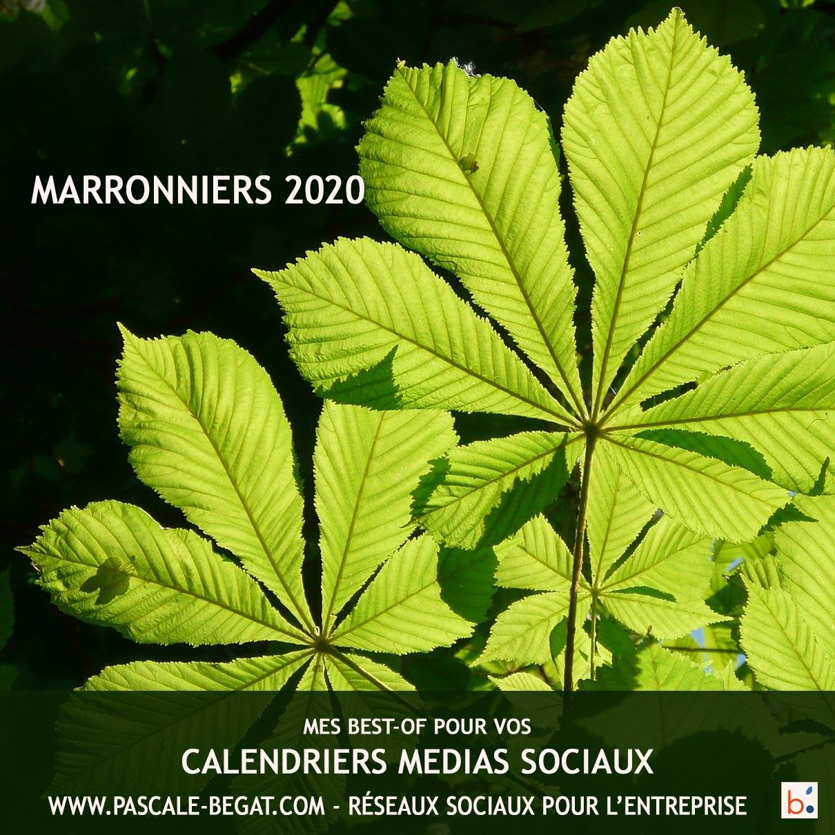 Marronier 2020